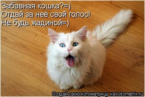 Котоматрица: Забавная кошка?=) Отдай за неё свой голос! Не будь жадиной=)