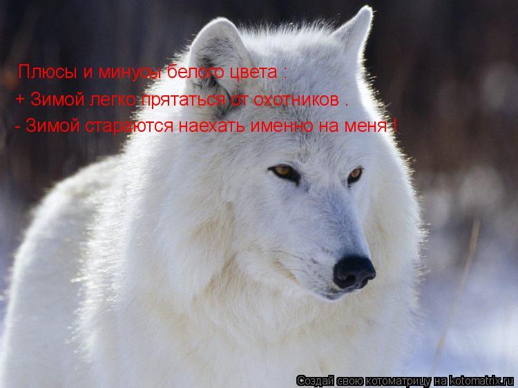 Котоматрица: Плюсы и минусы белого цвета : + Зимой легко прятаться от охотников . - Зимой стараются наехать именно на меня !