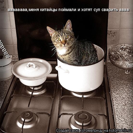 Котоматрица: аааааааа,меня китайцы поймали и хотят суп сварить аааа аааааааа,меня китайцы поймали и хотят суп сварить аааа
