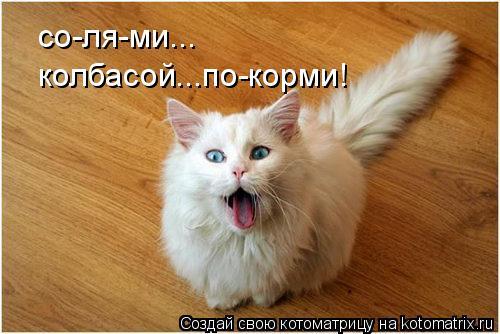 Котоматрица: со-ля-ми... колбасой...по-корми!