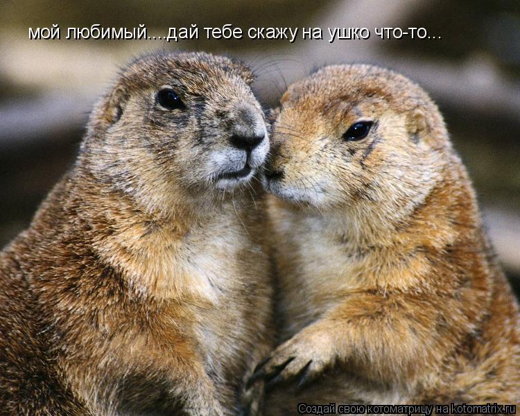 Котоматрица: мой любимый....дай тебе скажу на ушко что-то...