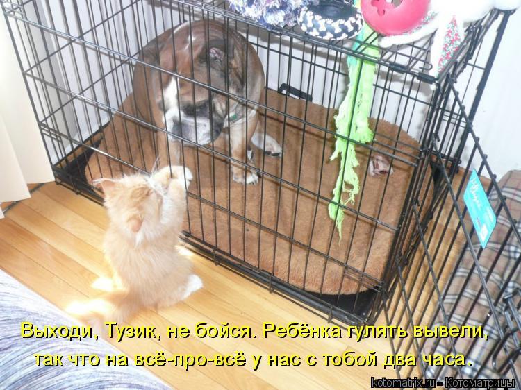 http://kotomatrix.ru/images/lolz/2009/07/25/328159.jpg