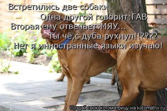 Котоматрица: Встретились две собаки Одна другой говорит:ГАВ Вторая ему отвечает:МЯУ... Ты чё,с дуба рухнул!!???? Нет я инностранные языки изучаю!