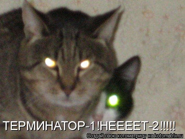 Котоматрица: ТЕРМИНАТОР-1!НЕЕЕЕТ-2!!!!!