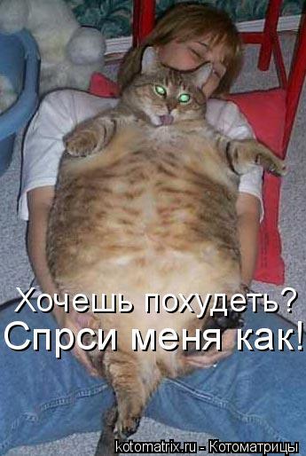 Котоматрица: Хочешь похудеть? Спрси меня как!