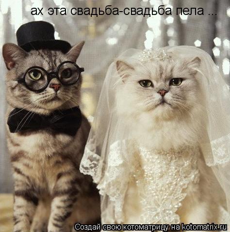 Котоматрица: ах эта свадьба-свадьба пела ...