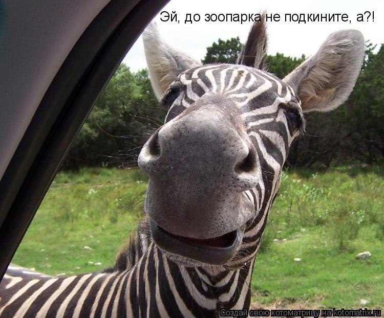 Котоматрица: Эй, до зоопарка не подкините, а?!