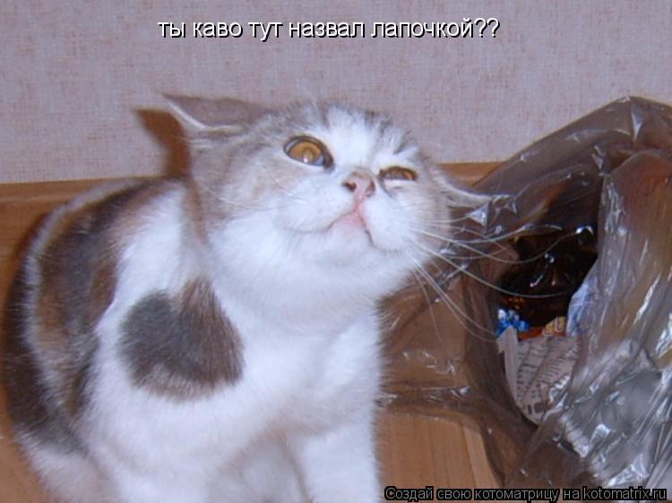Котоматрица: ты каво тут назвал лапочкой??
