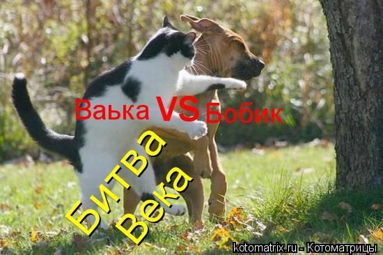 Котоматрица: Ваька Бобик Битва Века vs