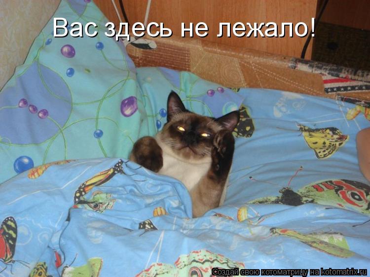 Котоматрица: Вас здесь не лежало!