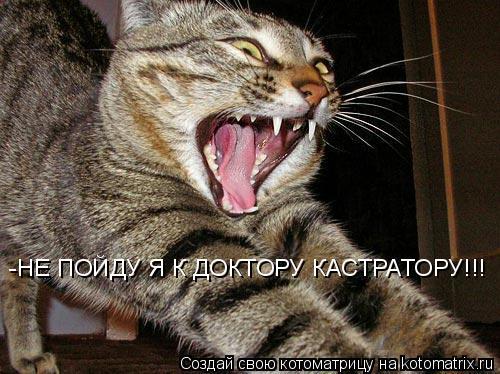 Котоматрица: -НЕ ПОЙДУ Я К ДОКТОРУ КАСТРАТОРУ!!!