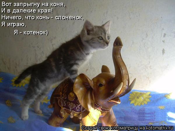 Котоматрица: Вот запрыгну на коня, И в далекие края! Ничего, что конь - слоненок, Я играю, Я - котенок)