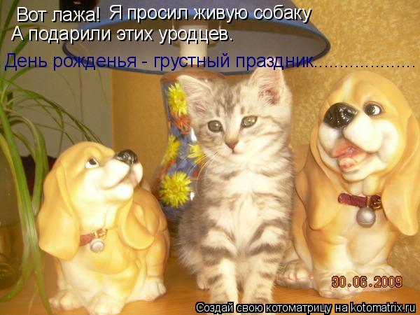 Котоматрица: Вот лажа! Я просил живую собаку А подарили этих уродцев. День рожденья - грустный праздник....................