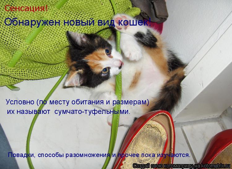 Котоматрица: Условно (по месту обитания и размерам)  Сенсация!  Обнаружен новый вид кошек!  их называют  сумчато-туфельными.   Повадки, способы разомножени