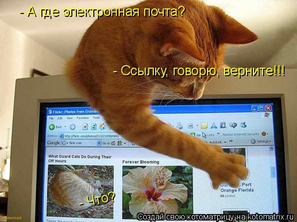 Котоматрица: - А где электронная почта?  - Что?  - Ссылку, говорю, верните!!!