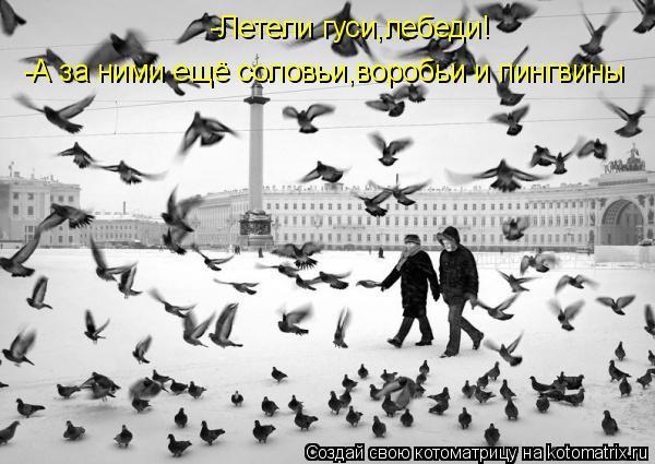 Котоматрица: -Летели гуси,лебеди! -А за ними ещё соловьи,воробьи и пингвины
