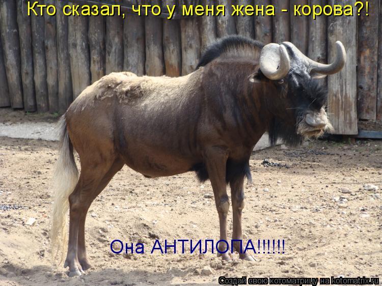 Котоматрица: Кто сказал, что у меня жена - корова?! Она АНТИЛОПА!!!!!!