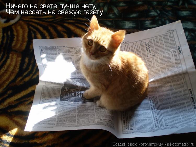 Котоматрица: Ничего на свете лучше нету, Чем нассать на свежую газету...