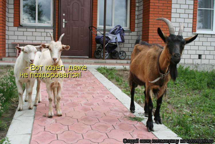 Котоматрица: - Вот козёл, даже не поздоровался!