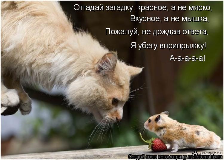 Котоматрица: Отгадай загадку: красное, а не мяско, Вкусное, а не мышка, Пожалуй, не дождав ответа, Я убегу вприпрыжку! А-а-а-а-а!