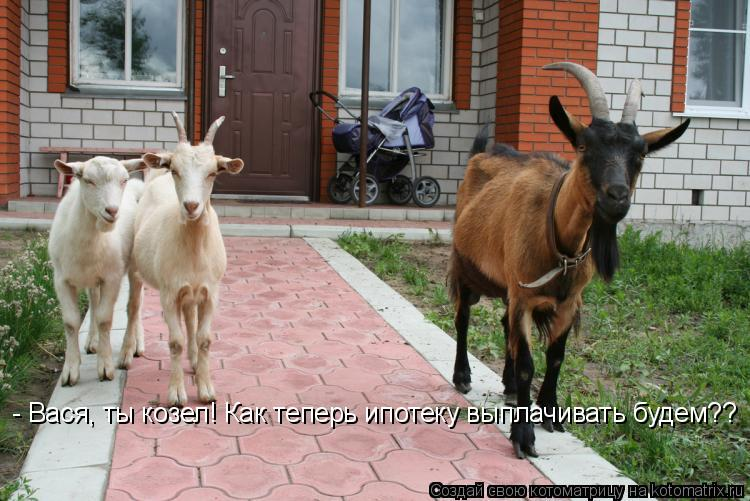 Котоматрица: - Вася, ты козел! Как теперь ипотеку выплачивать будем??