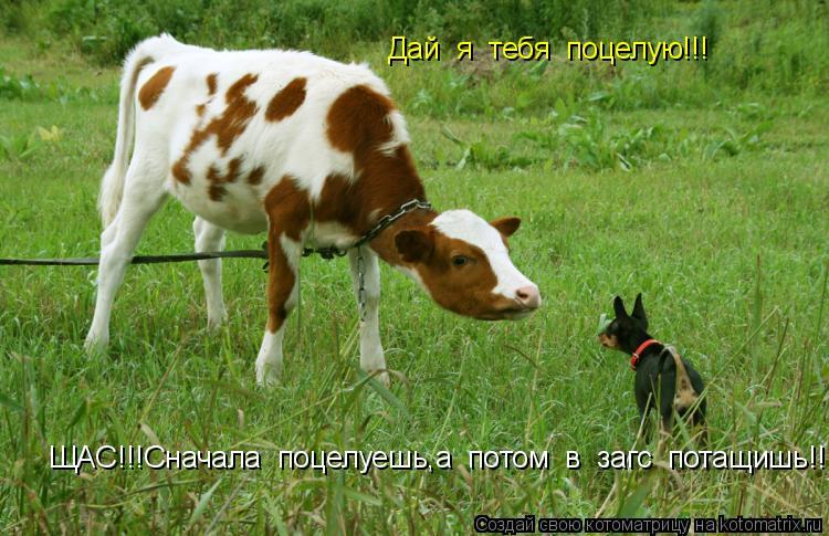Котоматрица: Дай  я  тебя  поцелую!!! ЩАС!!!Сначала  поцелуешь,а  потом  в  загс  потащишь!!!