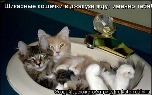 Котоматрица: Шикарные кошечки в джакузи ждут именно тебя!