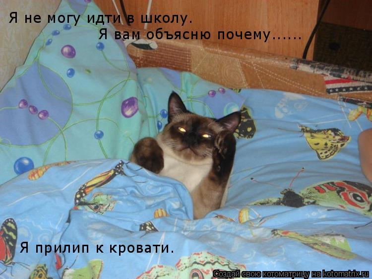 Котоматрица: Я не могу идти в школу. Я вам объясню почему...... Я прилип к кровати.