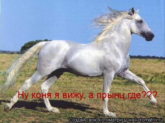 Котоматрица: Ну коня я вижу, а прынц где???