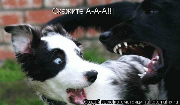 Котоматрица: Скажите А-А-А!!!