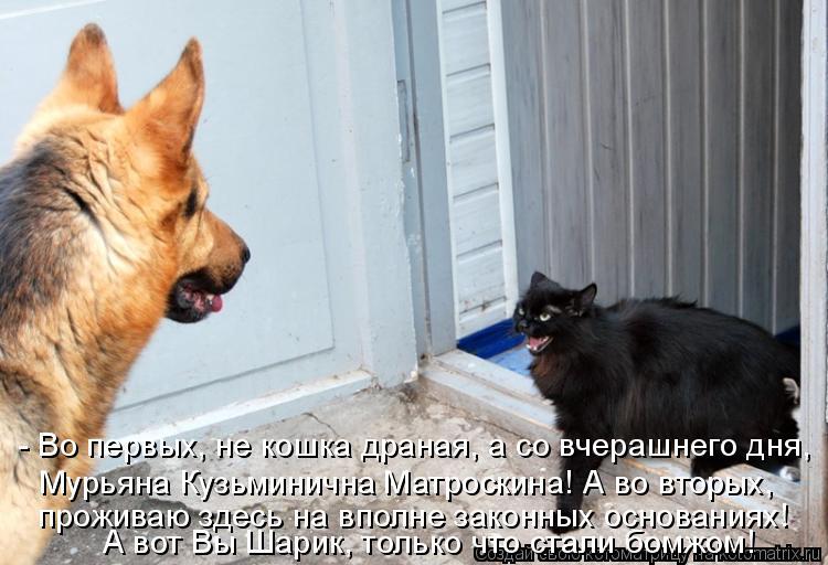 Котоматрица: - Во первых, не кошка драная, а со вчерашнего дня, Мурьяна Кузьминична Матроскина! А во вторых, проживаю здесь на вполне законных основаниях!