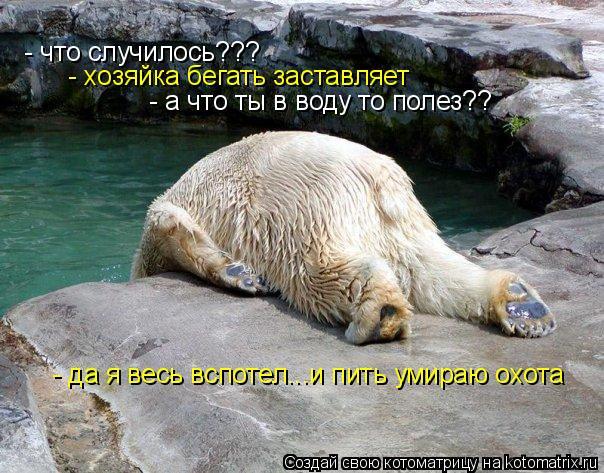 Котоматрица: - что случилось???  - хозяйка бегать заставляет - а что ты в воду то полез??  - да я весь вспотел...и пить умираю охота
