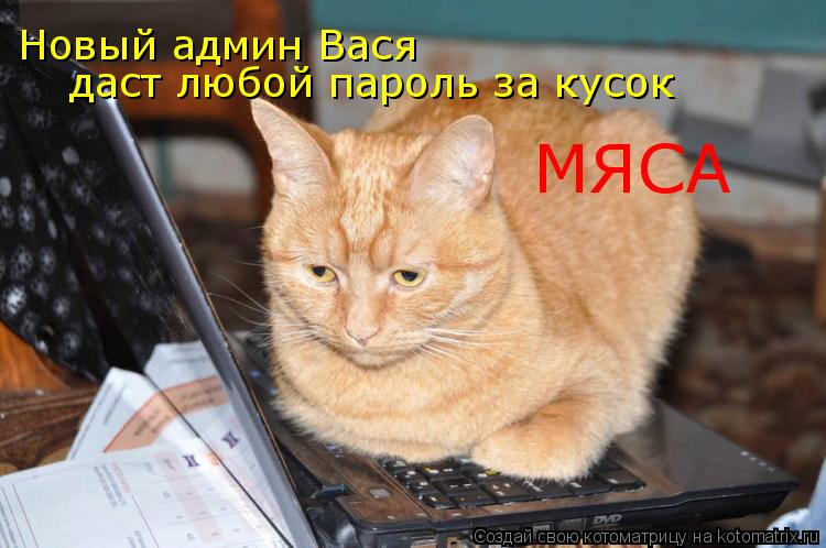 Котоматрица: Новый админ Вася даст любой пароль за кусок МЯСА