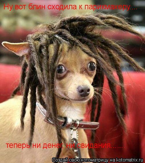 Котоматрица: Ну вот блин сходила к парикмахеру.... теперь ни денег, ни свидания.......