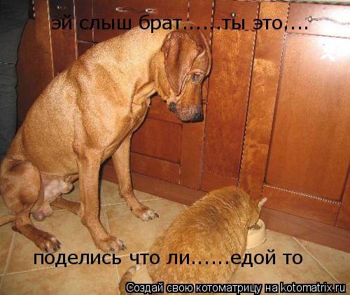 Котоматрица: эй слыш брат......ты это.... поделись что ли......едой то