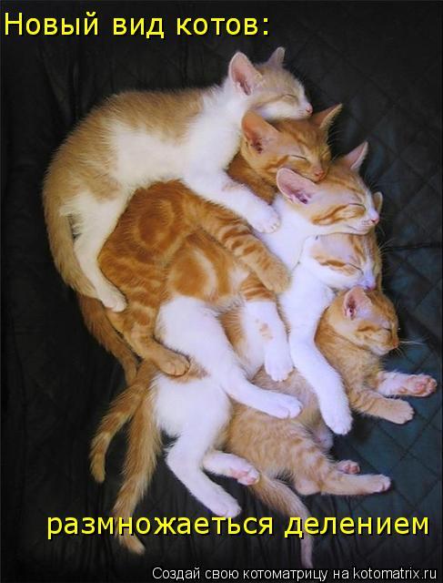 Котоматрица: Новый вид котов: Новый вид котов: размножаеться делением