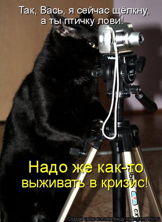 Котоматрица: Так, Вась, я сейчас щёлкну, а ты птичку лови! Надо же как-то выживать в кризис!