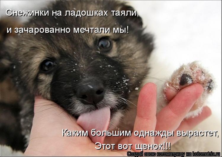 Котоматрица: Снежинки на ладошках таяли, и зачарованно мечтали мы! Каким большим однажды вырастет, Этот вот щенок!!!
