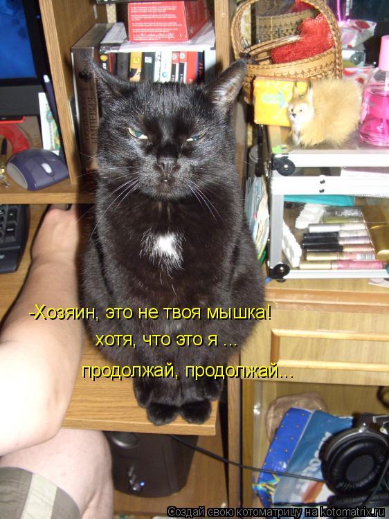 Котоматрица: -Хозяин, это не твоя мышка! хотя, что это я ... продолжай, продолжай...