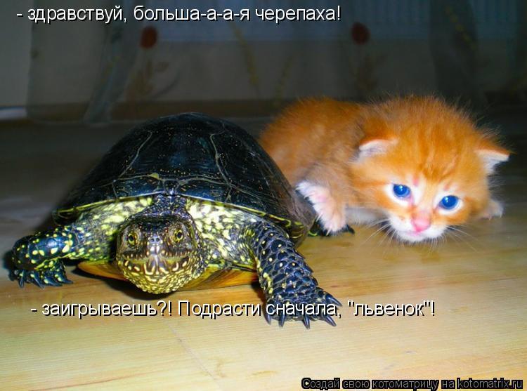 """Котоматрица: - здравствуй, больша-а-а-я черепаха! - заигрываешь?! Подрасти сначала, """"львенок""""!"""