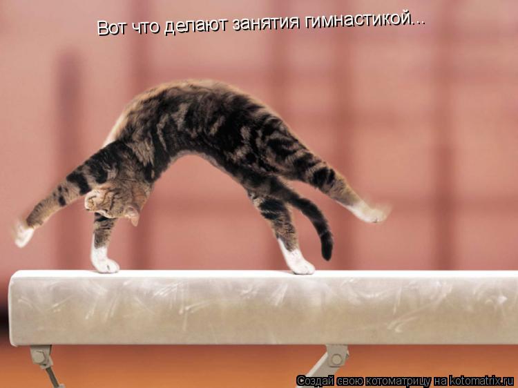Котоматрица: Вот что делают занятия гимнастикой...
