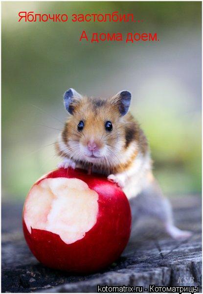 Котоматрица: Яблочко застолбил... А дома доем.