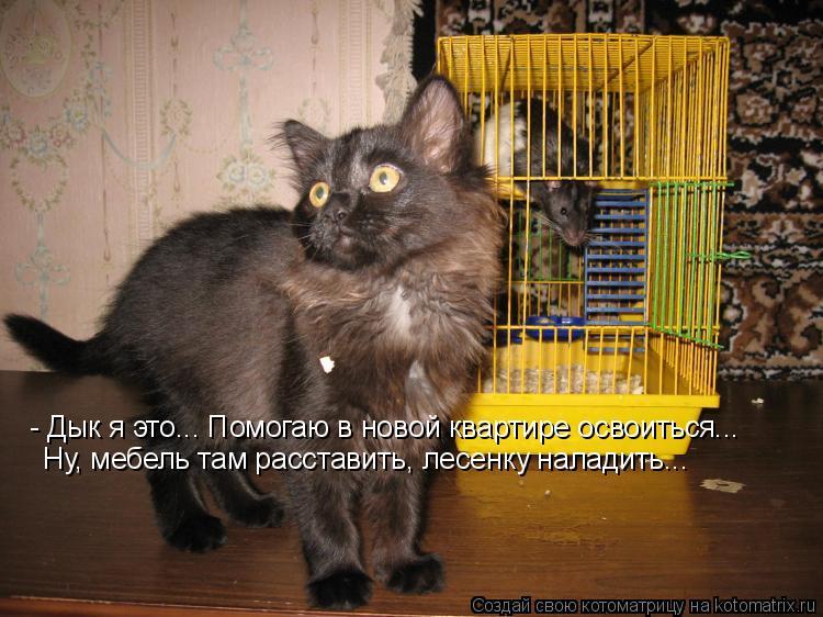Котоматрица: - Дык я это... Помогаю в новой квартире освоиться... Ну, мебель там расставить, лесенку наладить...