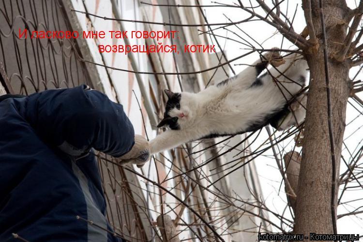 Котоматрица: И ласково мне так говорит: возвращайся, котик