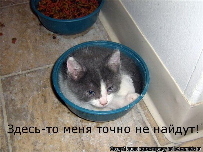 Котоматрица: Здесь-то меня точно не найдут!