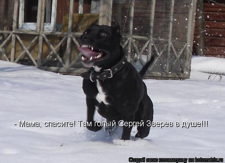 Котоматрица: - Мама, спасите! Там голый Сергей Зверев в душе!!!
