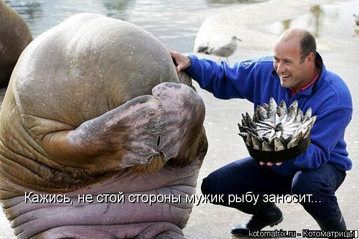 Котоматрица: Кажись, не стой стороны мужик рыбу заносит...
