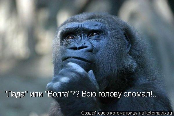 """Котоматрица: """"Лада"""" или """"Волга""""?? Всю голову сломал!.."""