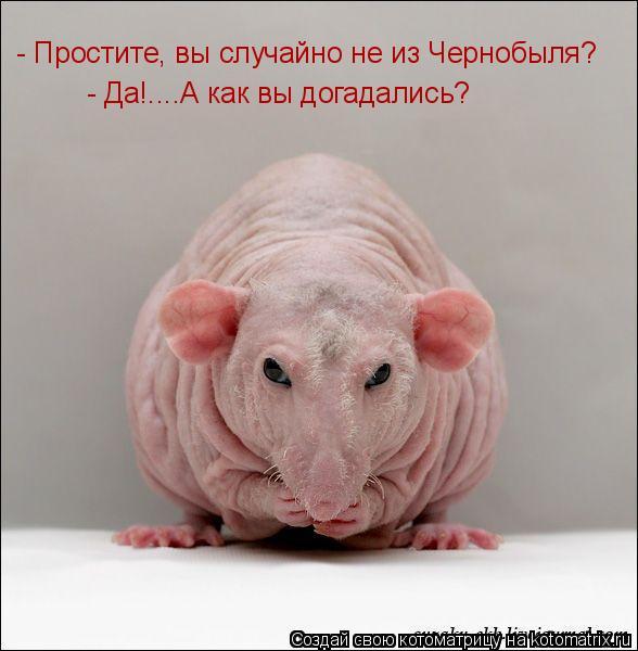 Котоматрица: - Да!....А как вы догадались? - Простите, вы случайно не из Чернобыля?