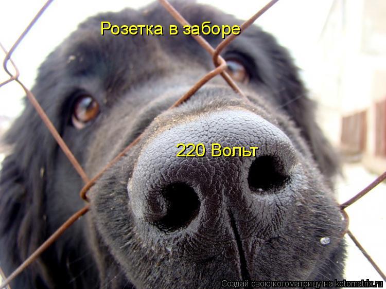 Котоматрица: Розетка в заборе 220 Вольт